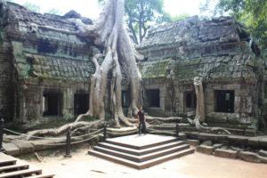 Ta Prohm, einer der vielen Tempeln rund um Angkor Wat
