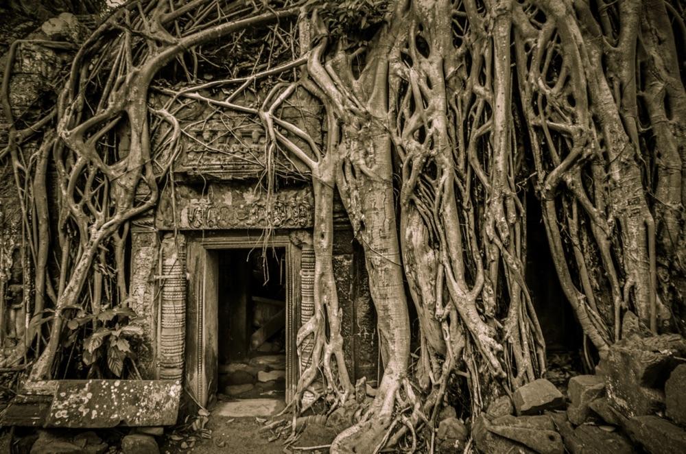 Ta Prohm, einer der vielen Tempeln rund um Angkor Wat (shutterstock.com / weltreisendertj)