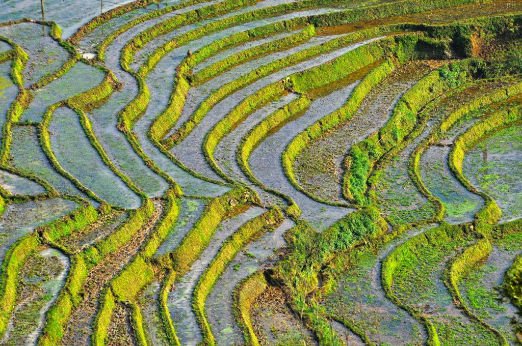 Reisfelder in Kambodscha im hohen Norden